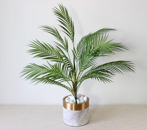 Parlor-palm-plant