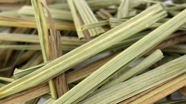 Lemongrass: Grow & Care for Cymbopogon Citratus