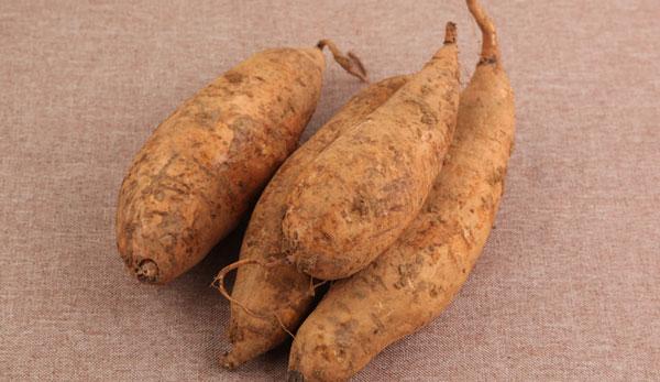 Cassava (Manihot esculenta)