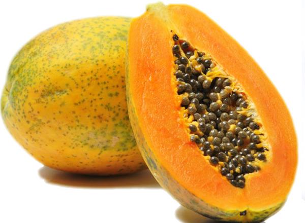 Papaya (Carica papaya)