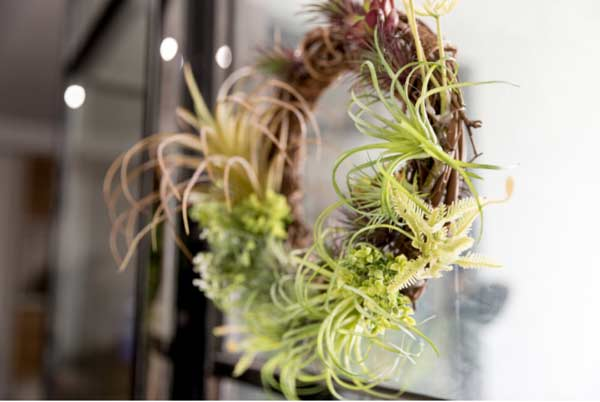 Air plant - most common house plant