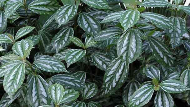 Aluminum-Plant
