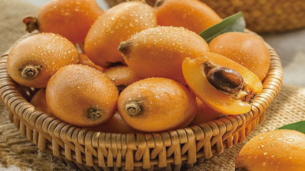 Loquat: Grow & Care for Eriobotrya japonica