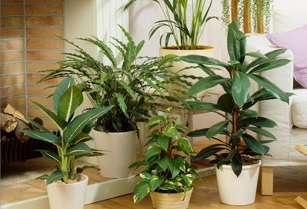 35 Most Common House Plants with Pictures & Care Guide