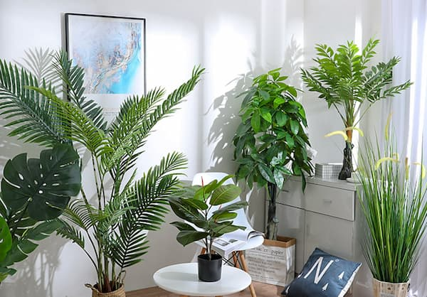 20 Best Indoor Trees With Care Guide & Pictures